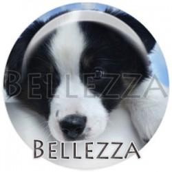 Cabochon verre, cabochon resine, chien de compagnie, couleur noir et blanc