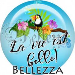 Cabochon verre, cabochon resine, toucan, exotique, la vie est belle, prospérité, bonheur